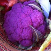 Purplec