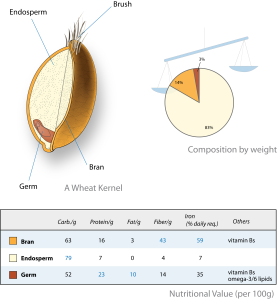 Wheat-kernel_nutrition