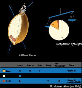 Wheat-kernel_nutrition